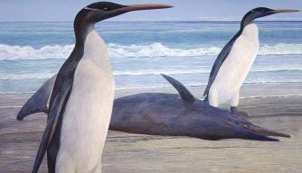 Giant Prehistoric Penguin Reconstructed