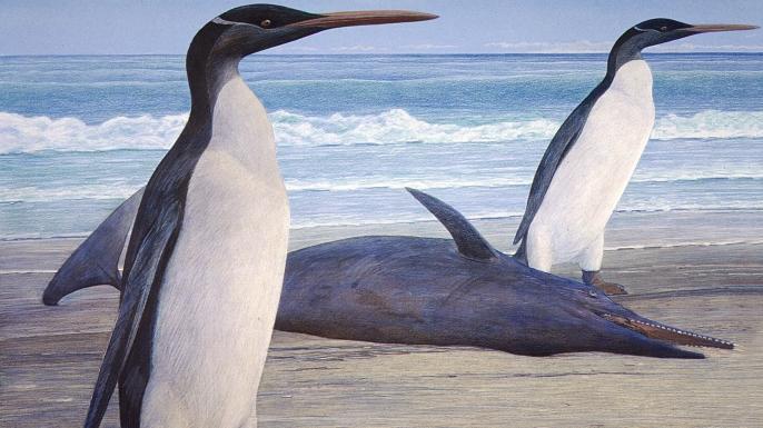 Reconstruction of two Kairuku penguins.