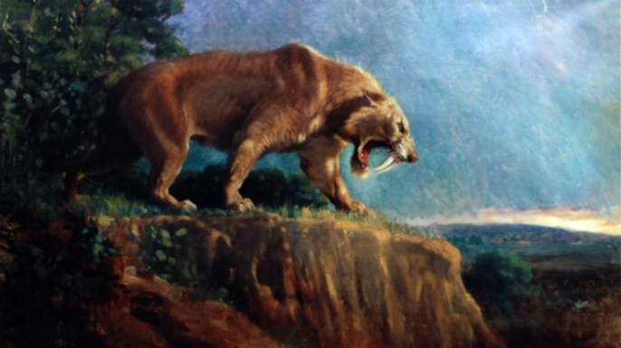 A 1905 depiction of Smilodon, also known as the saber-toothed cat.