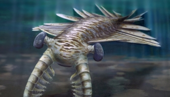 First Super Predator Was a Hawk-Eyed Shrimp, Study Shows