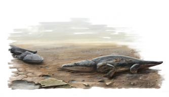An artist's impression of Metoposaurus algarvensis, discovered by researchers from the University of Edinburgh (Credit: University of Edinburgh/PA)