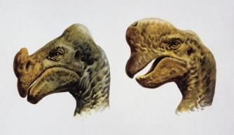 Flirting With Dinosaurs