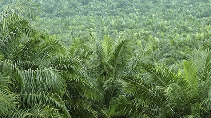 Palm fields in southern China.