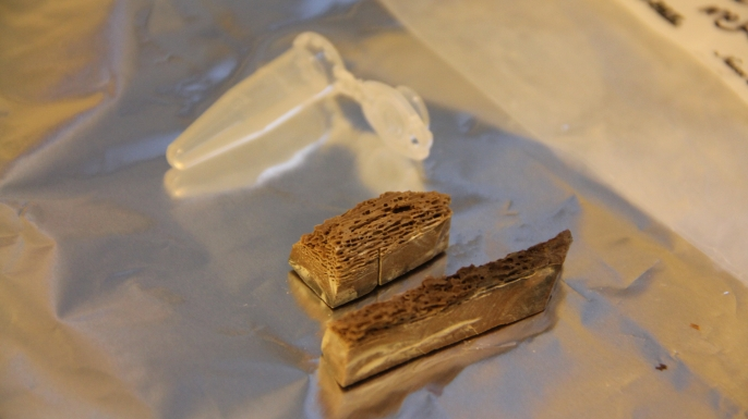 Pieces of 700,000-year-old metapodial bone used to decode DNA.