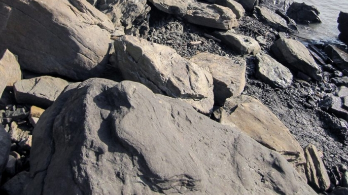 Important New Site for Dinosaur Fossils Discovered in ...