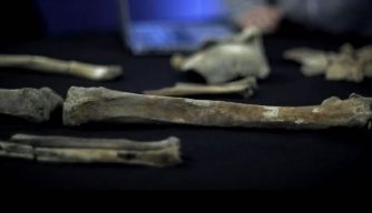 Probable Royal Pelvic Bone Found in Museum Storage