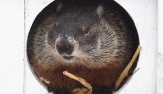 Beyond Punxsutawney: Meet the Other Groundhogs