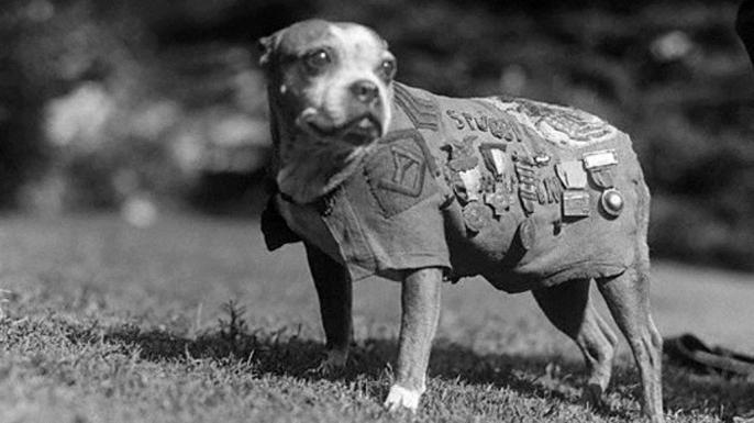 hith war animals stubby