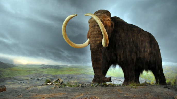 wooly mammoth, ice age