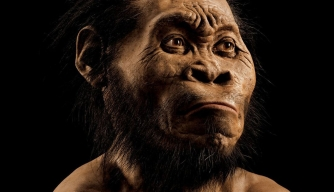 Early Human-Like Species Discovered in South Africa