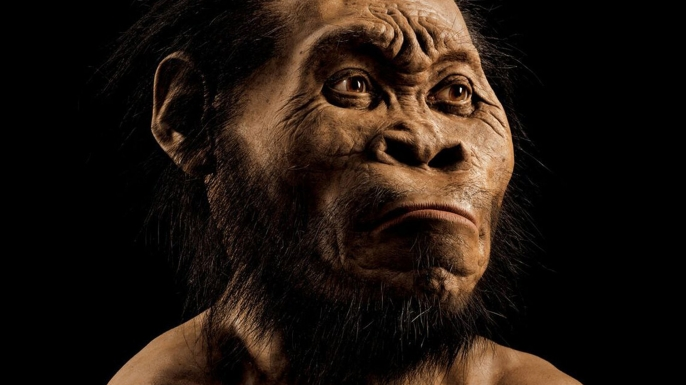 early humans, evolution