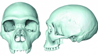 Scientists Recreate Skull of Human-Neanderthal Ancestor
