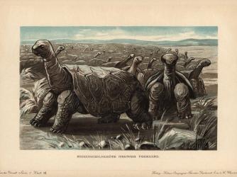 Saddleback tortoises. (Credit: Florilegius/Getty Images)