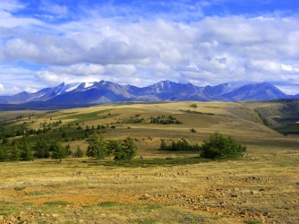 New tree-ring width measurements from the Russian Altai mountains indicate a drastic cold period 1,500 years ago. (Credit: Vladimir S. Myglan)