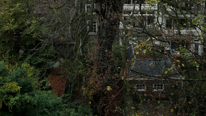The chestnut tree in the backyard of the house in Amsterdam where Anne Frank and her family were hiding during World War II. (Credit: EVERT ELZINGA/AFP/Getty Images)