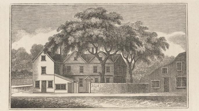 Liberty Tree illustration. (Credit: Public Domain)