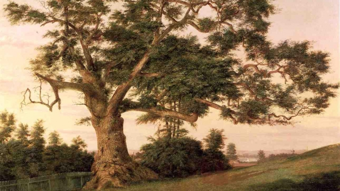Drawing of the Charter Oak. (Credit: Public Domain)
