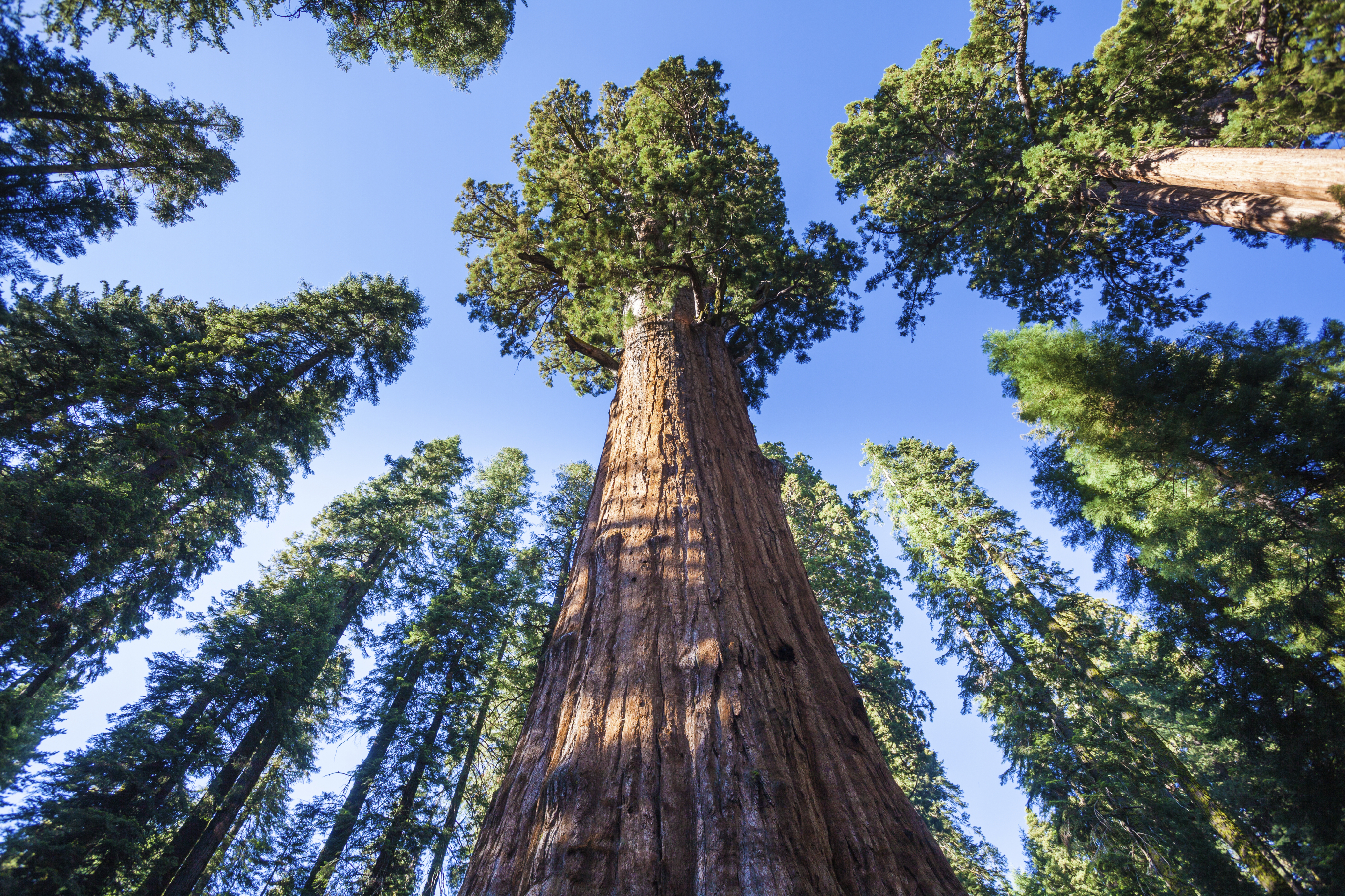 10 Famous Trees In History