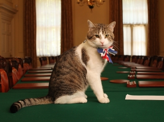 Larry, the Downing Street cat, gets in the royal wedding spirit in a Union flag bow-tie before the wedding of the Duke and Duchess of Cambridge. (Credit: James Glossop - WPA Pool/Getty Images)