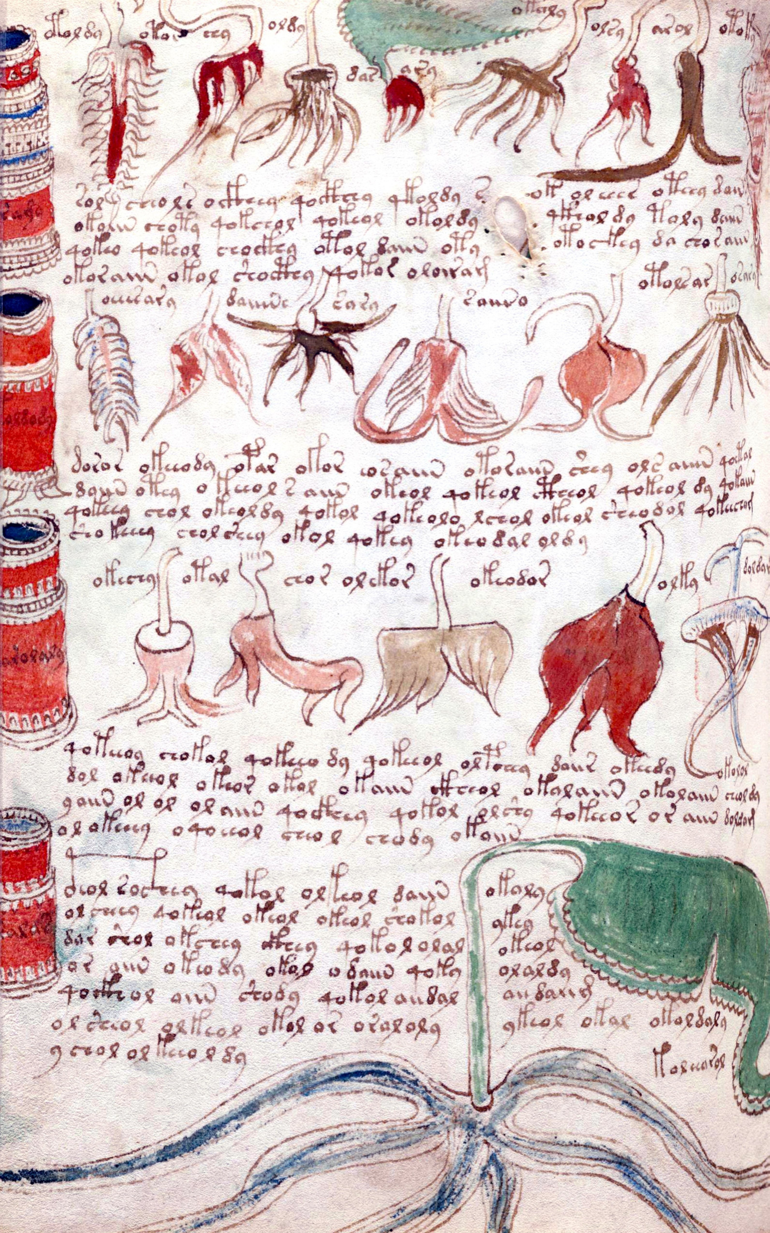 Voynich Manuskript übersetzung
