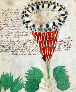 A page from the Voynich Manuscript.