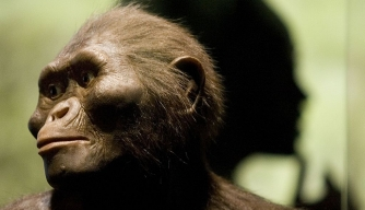 Did Lucy, Famed Human Ancestor, Die After Falling From a Tree?