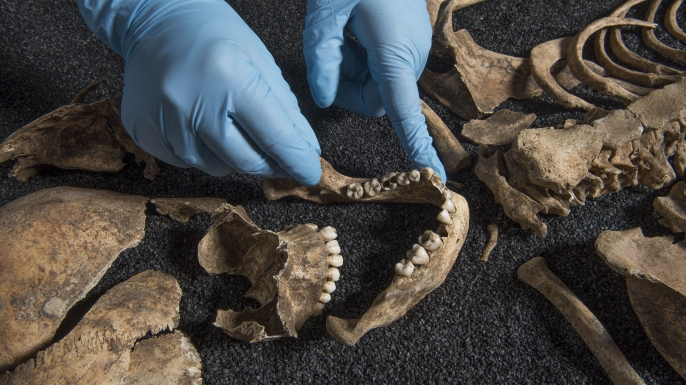 Parts of a skeleton recovered from the same cemetery in Southwark. (Credit: Museum of London)