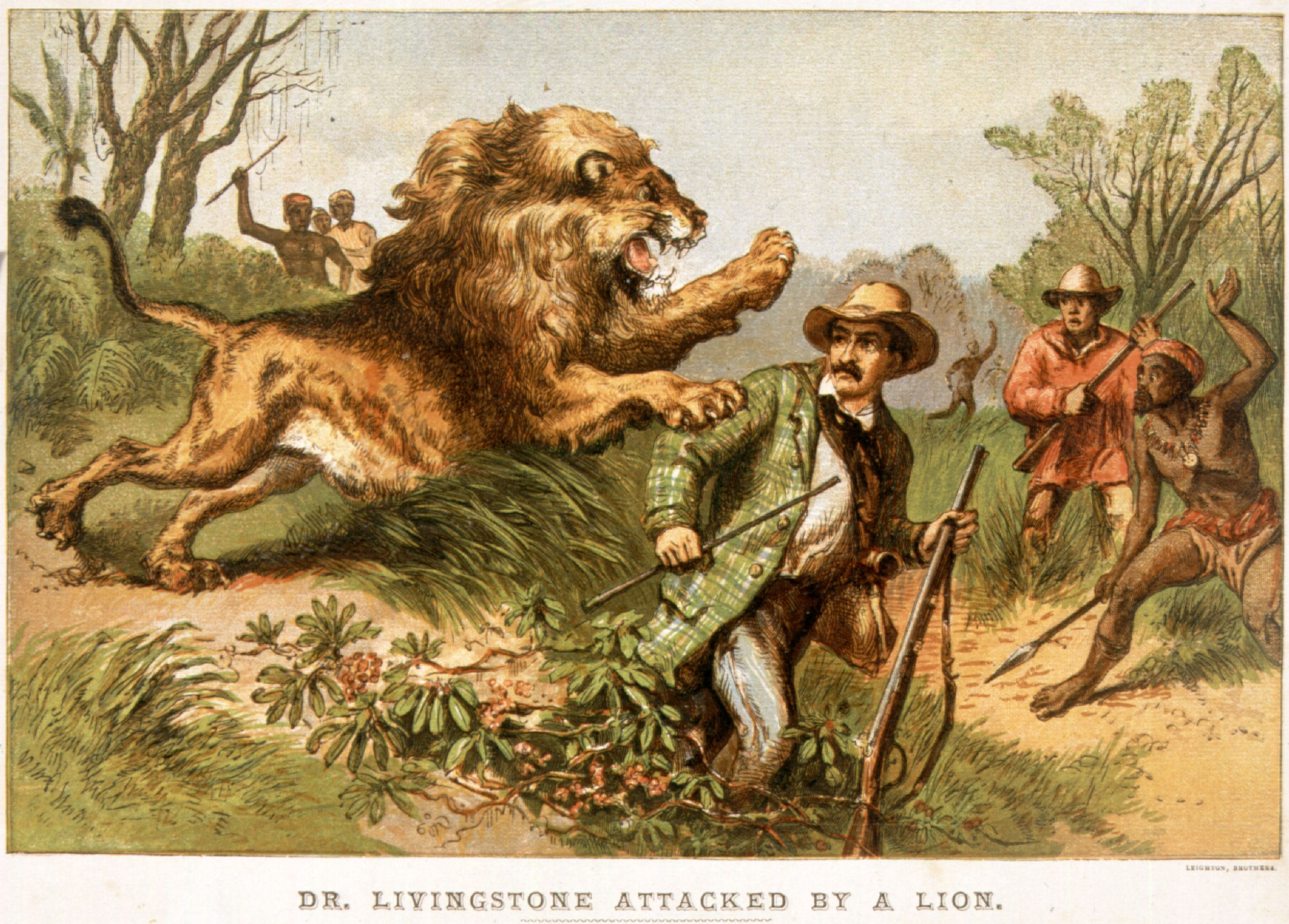 Depiction Of Livingstoneu0027s 1843 Lion Attack (Credit: Hulton Archive/Getty  Images)  Doctor Livingstone I Presume