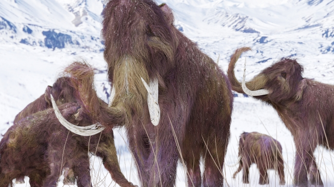 An illustration of a family of Woolly Mammoths grazing on what is left of the grasses as winter approaches in this ice age scene. (Credit:Aunt_Spray/www.istockphoto.com)