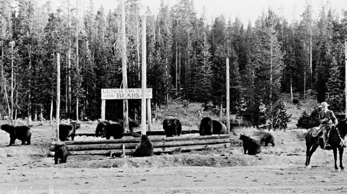 In the early days of National Park Service management in Yellowstone, bears would be fed at at garbage dumps. (Credit: National Park Service)