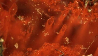 Have Scientists Found the World's Oldest Fossils?