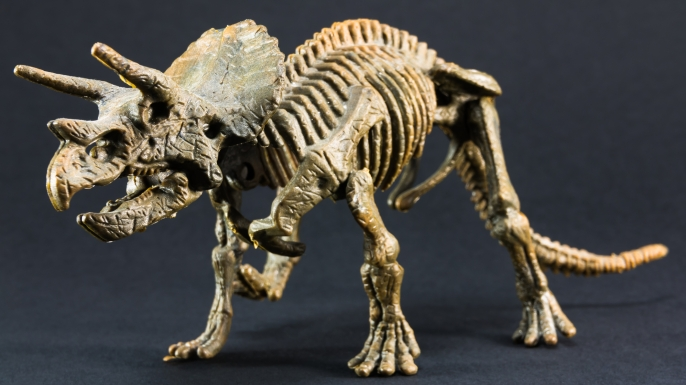Model of a Triceratops skeleton.