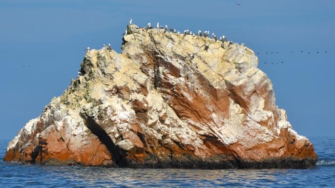 Sea birds on an island.
