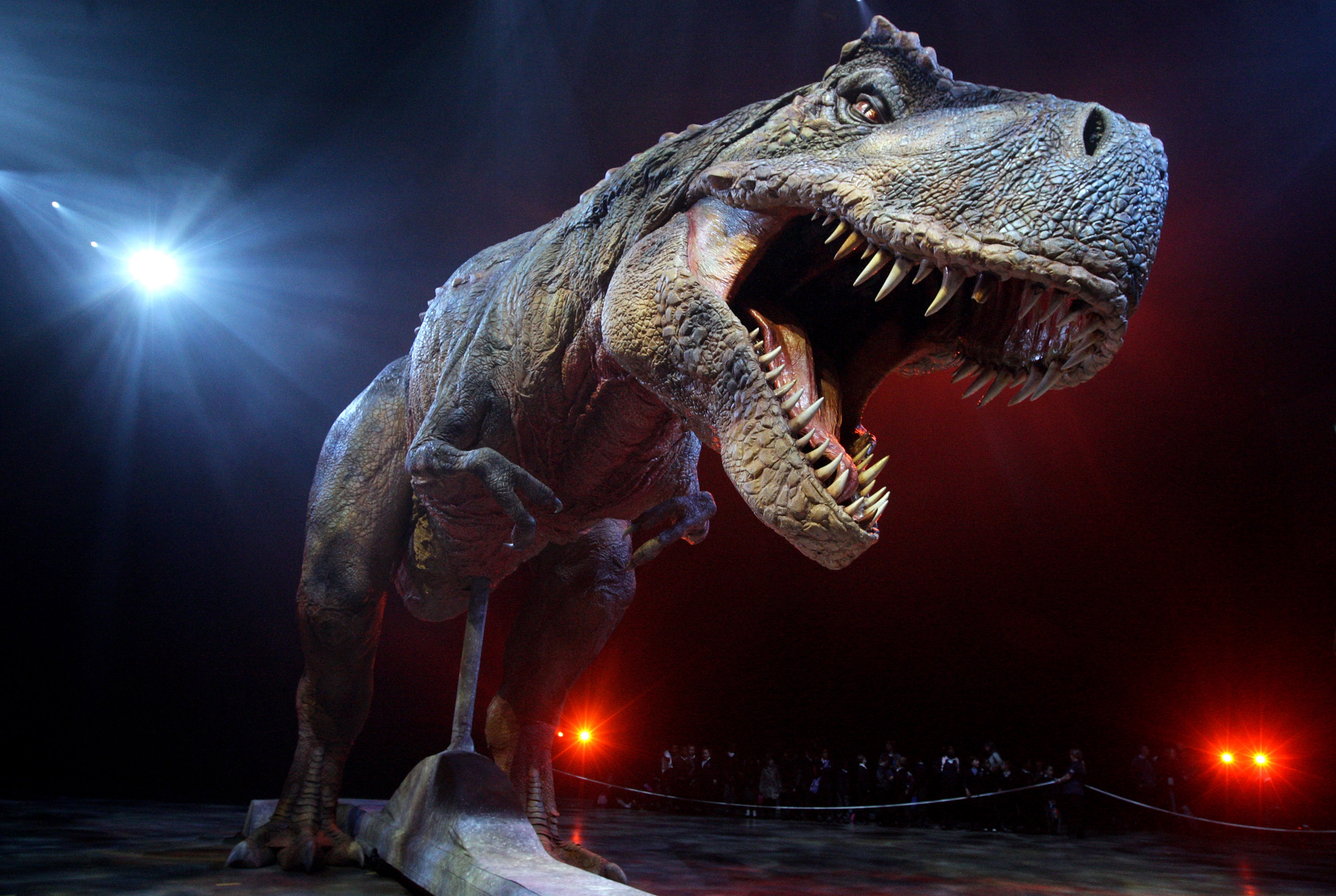 New Study Finds the T. Rex Was Easy to Outrun - History in ... - photo#35