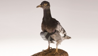Pigeon Cameras and Other CIA Cold War Spy Gear