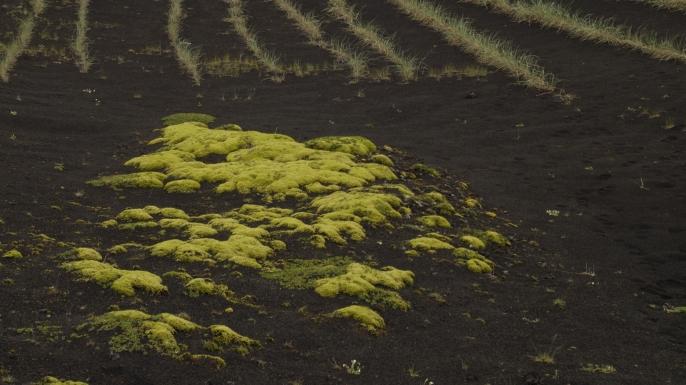 Planting vegetation on volcanic soil Iceland. (Credit: Christian Handl/imageBROKER/REX/Shutterstock)