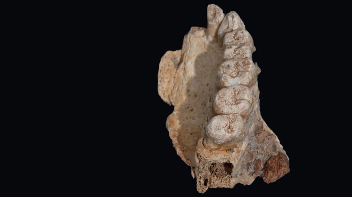 A piece of jawbone that was found. (Credit: Rolf Quam)
