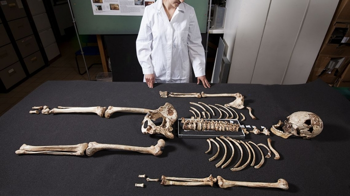 The skeleton of Cheddar Man, at the London Natural History Museum, which was unearthed in Gough's Cave at Cheddar Gorge, Somerset in 1903. (Credit: London Natural History Museum/REX/Shutterstock)