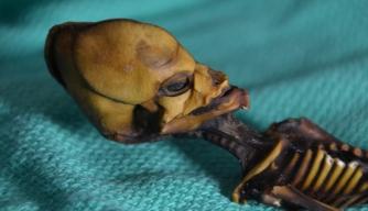 No, This Tiny Mummy Isn't an Alien