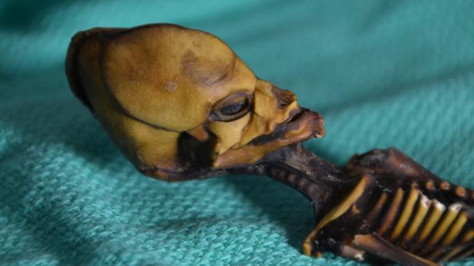 Atacama Skeleton Discovery