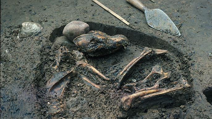 Koster dog burial, July 1975, (Credit: Del Baston, courtesy of the Center of American Archeology)
