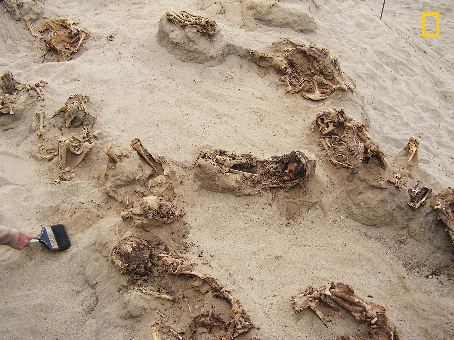 Preserved in dry sand for more than 500 years, more than a dozen children were revealed over the course of a day by archaeologists. The majority of the ritual victims were between eight and12 years old when they died. The work is supported by grants from the National Geographic Society. (Credit: Gabriel Prieto/National Geographic)