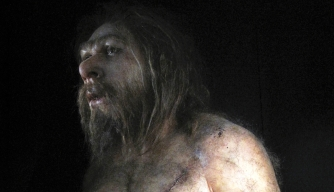 Neanderthals May Have Gone Extinct Due to Their Brain Shape