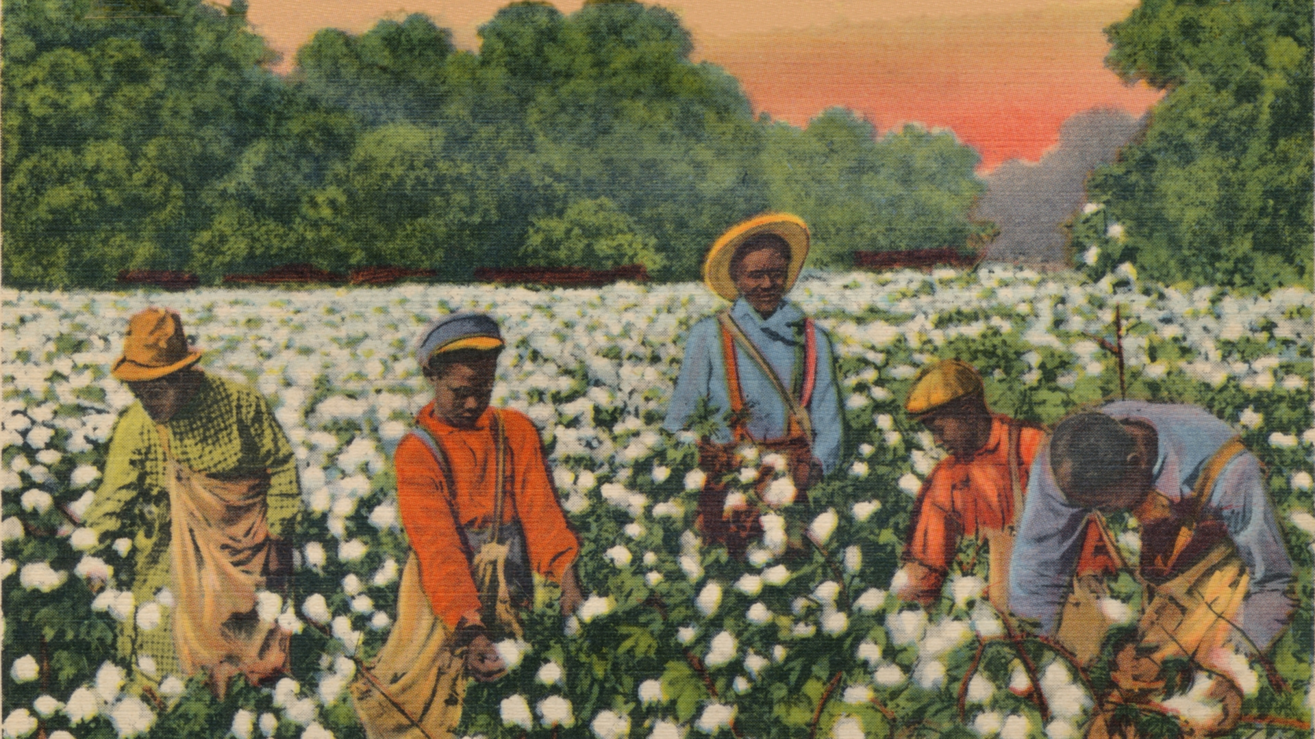 Early 1900s postcard featuring slaves picking cotton. Bucolic images of slave life perpetuated the myth that blacks were better off under white people's oversight. (Credit: The Print Collector/Print Collector/Getty Images)