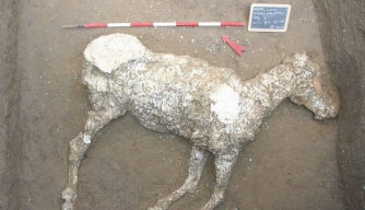 Discovered: Eerie Outline of Horse That Died at Pompeii