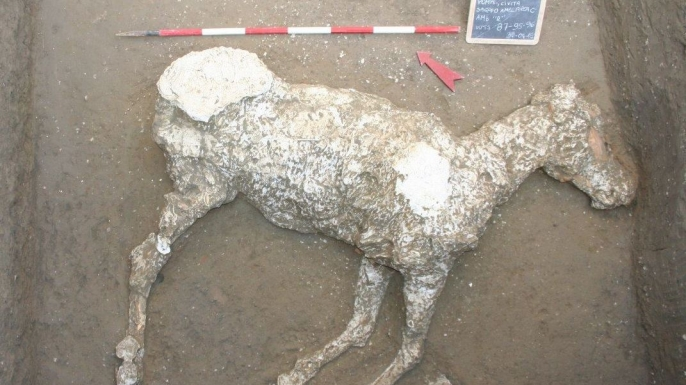 The plaster cast of a horse, discovered in an ancient stable outside Pompeii. (Photo by Parco Archeologico di Pompei)